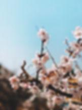 봄의 시작.JPEG