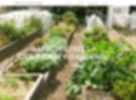 mscgardens-website.jpg