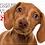 Thumbnail: Dachshund Love 2021 Calendar