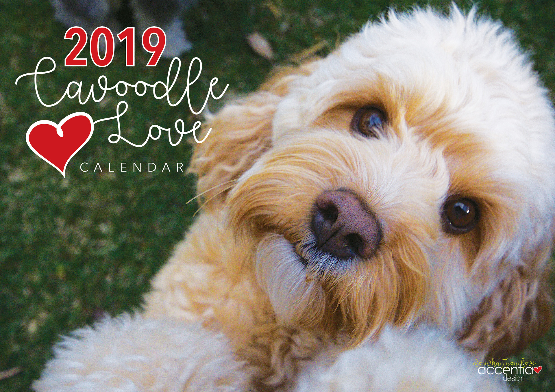 2019 Cavoodle Calendar Cover Final.jpg