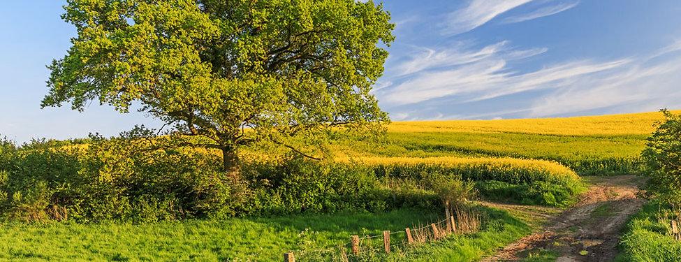 Natur in Quickborn, Kreis Pinneberg, Schleswig-Holstein