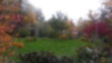 Herbst Aronia Gabriele.JPG