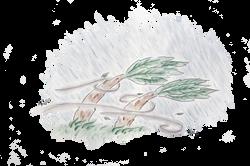 Harvey Harvey Hurricane Illustration