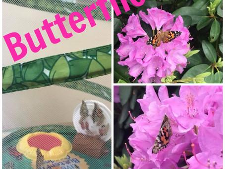 Fly Butterflies