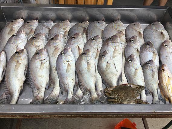 24 ปลาสดๆ ที่เพิ่งจับมา