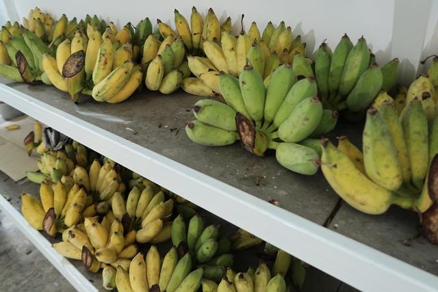 14 กล้วยจากสวนที่ปลูกเอง