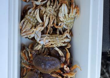 A few crab