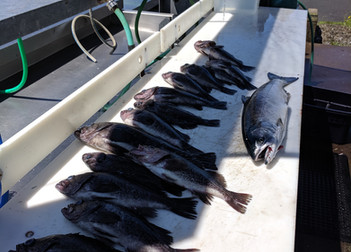 A few Rockfish and a Salmon