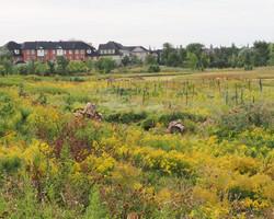 planting site3