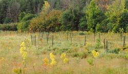 2021 09 11 10000 tree plant, by Gary James P9110049 copy
