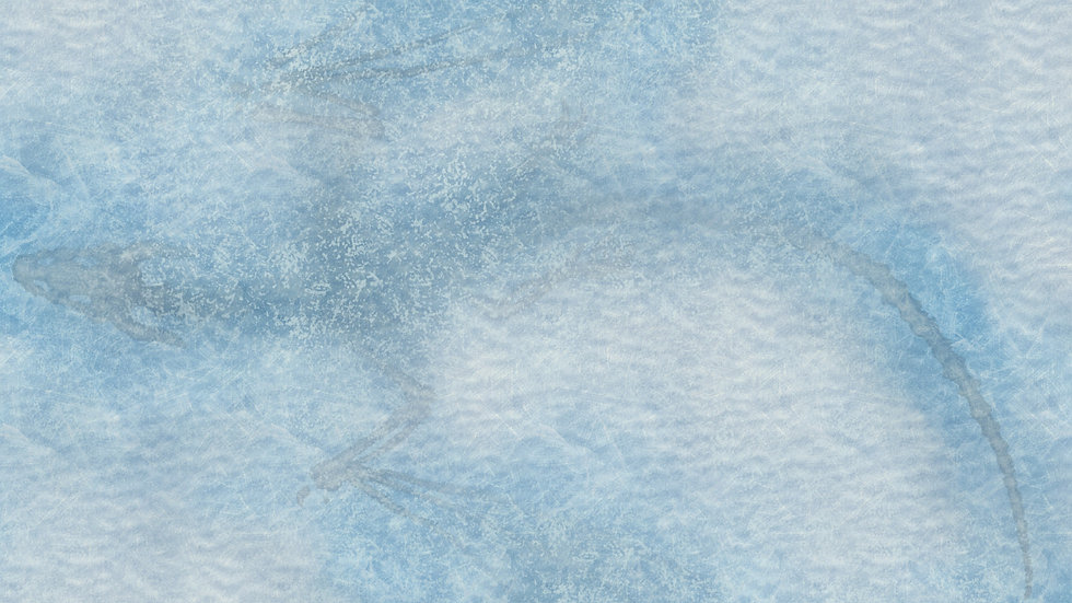 Ice Dragon Battlemap