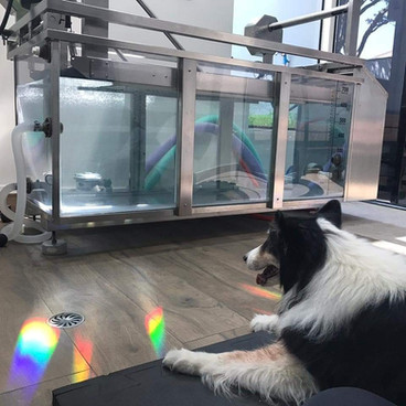Hydro Esteira Pet