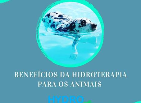Benefícios da hidroterapia para animais.
