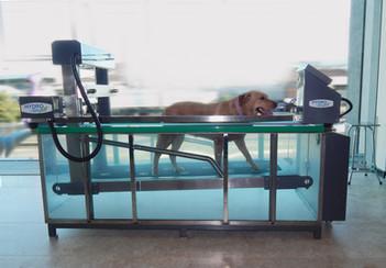 Reabilitação Animal HydroPet