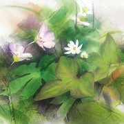 Shirley Miller Wildflower Trail: Spring Social