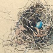Nature Journal - Bluebird Nest print.jpg
