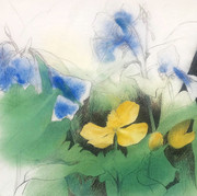 Bluebells and Poppies at the Pocket