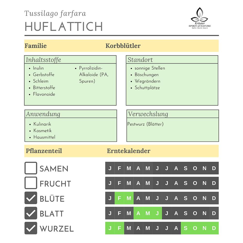 Huflattich Inhaltsstoffe Standort Anwendung Verwechslung