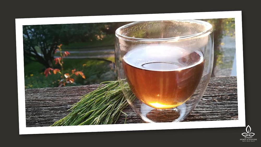 Ackerschachtelhalm Zinnkraut Tee Aufguss