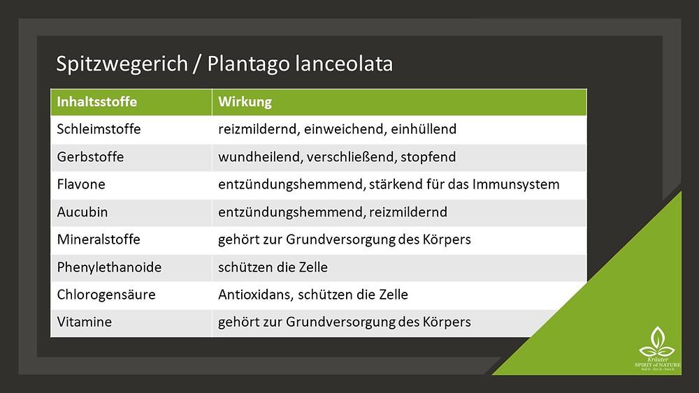 Spitzwegerich Schleimstoffe Gerbstoffe Flavone Mineralien Vitamine