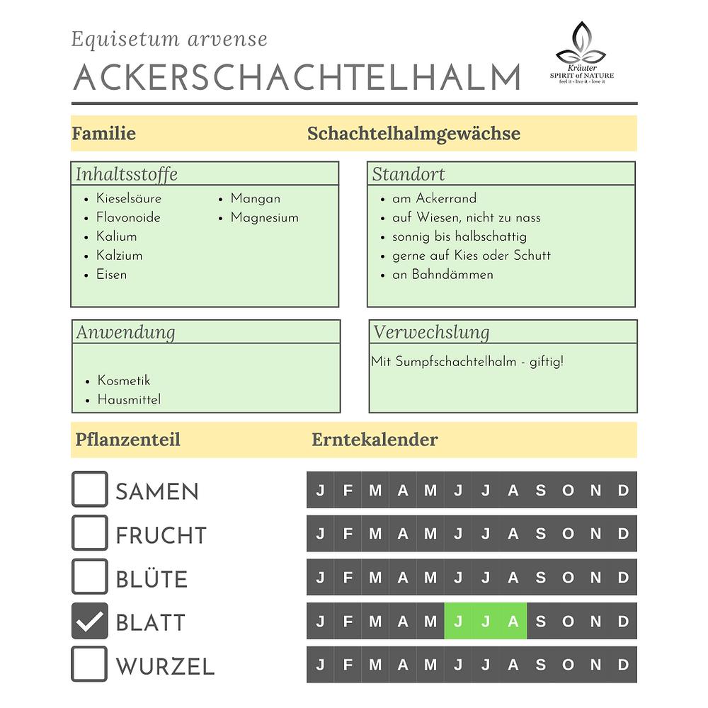 Inhaltsstoffe Ackerschachtelhalm Steckbrief