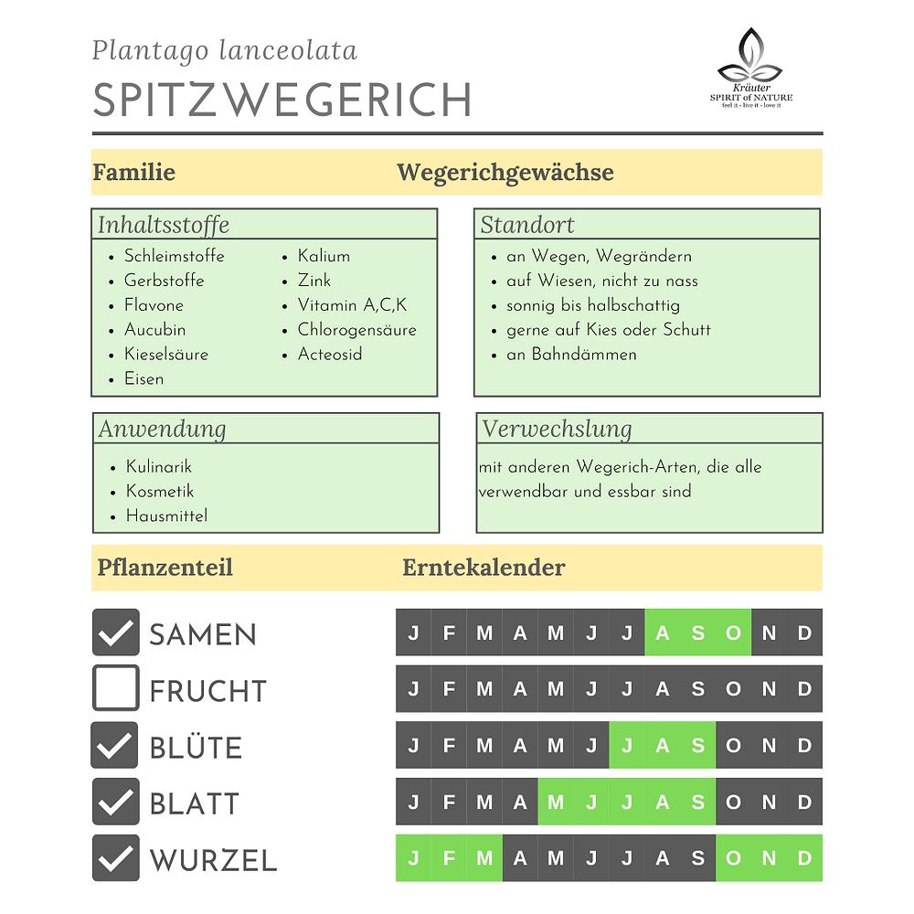 Steckbrief Spitzwegerich Inhaltsstoffe Standort Verwendung
