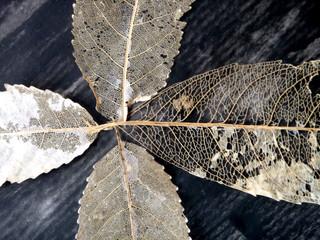 Leaf Collection After Tivaevae detail.jp