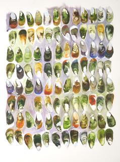 Kuku  Green Shelled Mussel  Shell Contemplation Series
