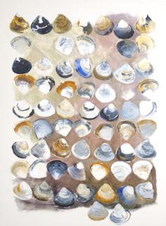 Whangai Koro Mactra: Shell Contemplation Series