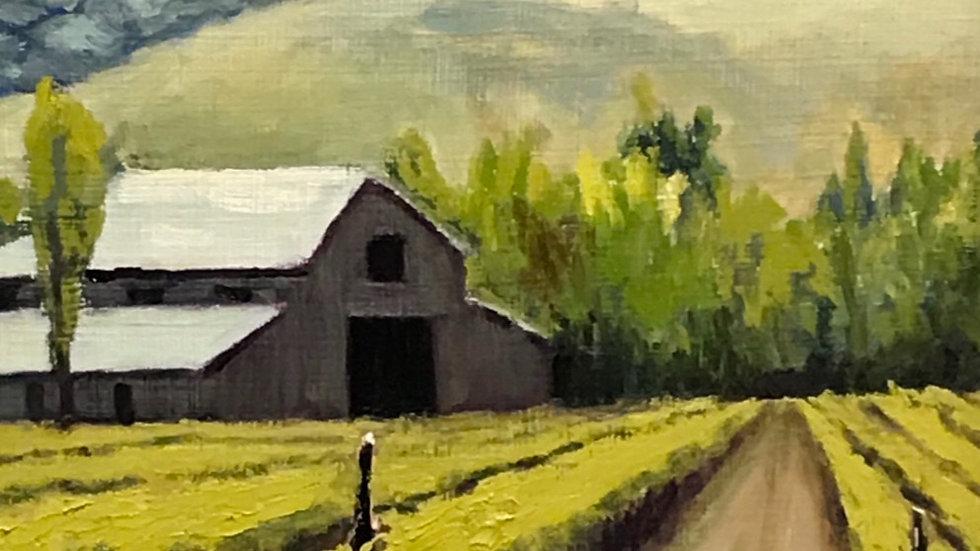 Vineyard Barn
