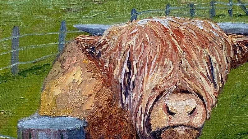 American Highland Cow