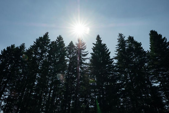 bright-sun-above-tall-forest_925x.jpg