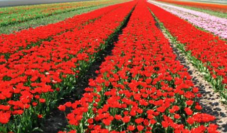 horticulture-floriculture-organic-truth.