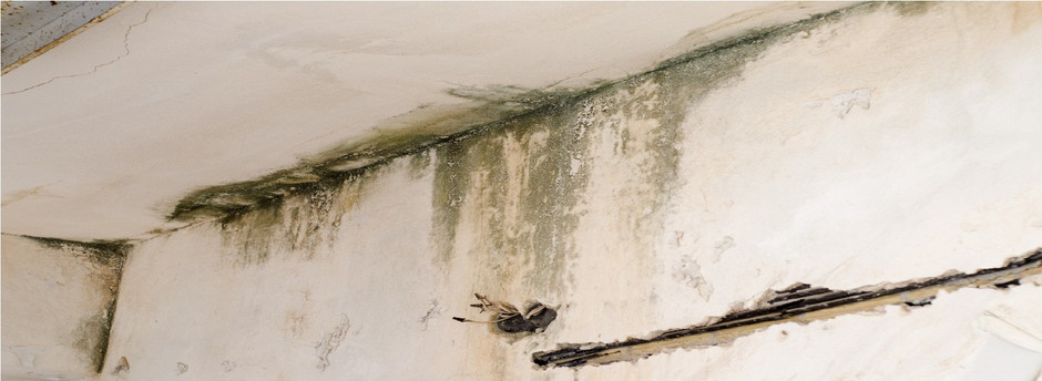 How Does Mold Grow on Walls?