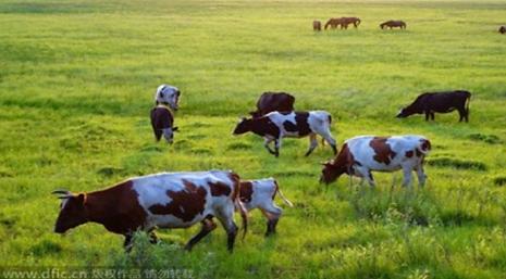 Pastureland-and-livestock-organic-truth.
