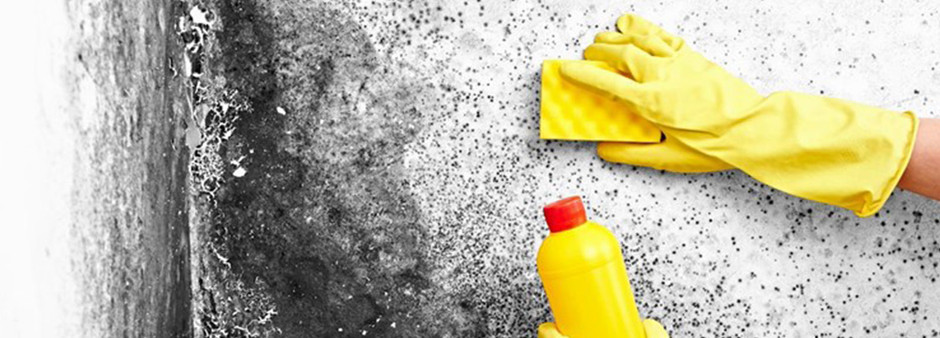 Why Cleaning Mold Is Best Left To The Pros