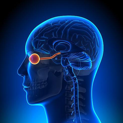 What is Neuro-Optometric Vision Rehabili