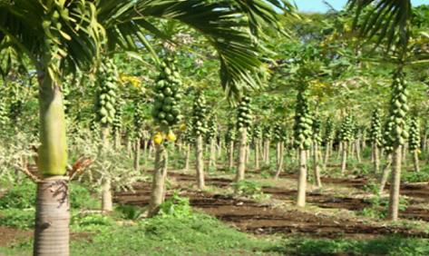 organic-truth-perennial-tree-tops.png