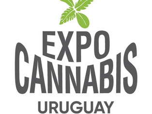 No Uruguai, Expocannabis terá palestra de farmacêutica brasileira sobre uso da planta no tratamento
