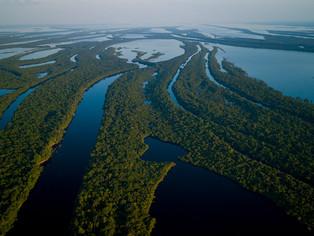 Parque Nacional de Anavilhanas, no Amazonas, é tema de websérie
