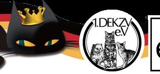 Brasil participa de competição internacional de gatos com 37 animais