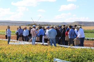 Embrapa lança cultivar de feijão em Dia de Campo em Cristalina