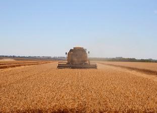 Propriedade de Cristalina, em Goiás, registra recorde brasileiro na produtividade de trigo