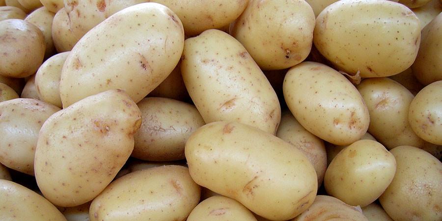 Alta na oferta de batata tem refletido na baixa dos preços do tubérculo
