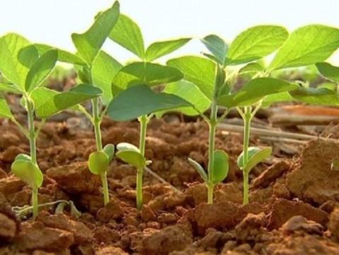 Com o fim do vazio sanitário, agricultores começam o plantio de soja em Goiás