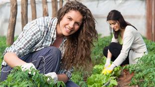 Inscrições para curso técnico em agronegócio   gratuito estão abertas em Goiás