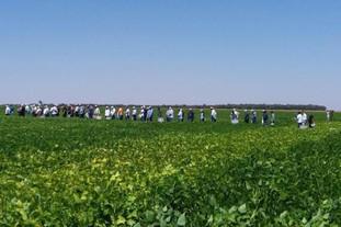 Fazenda Pontinha recebe consultores do GTEC-Feijão em Cristalina