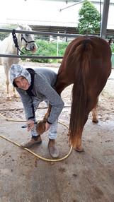 מטפלים בסוסים