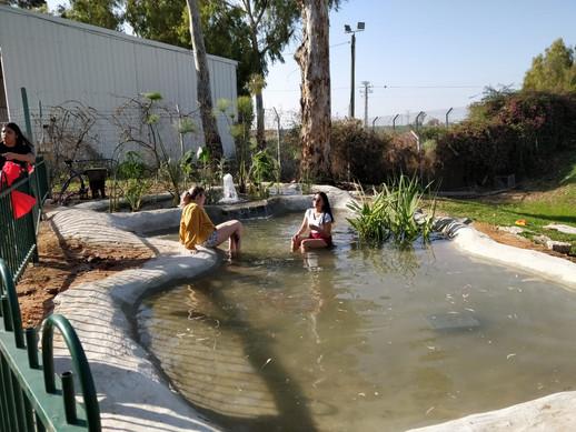 Duck pool