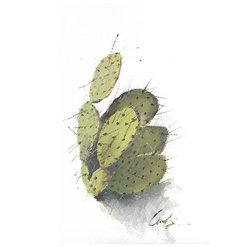 Cactus Cards